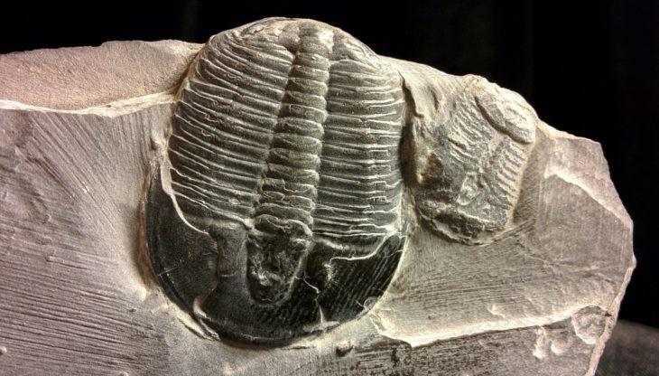 trilobites extinción