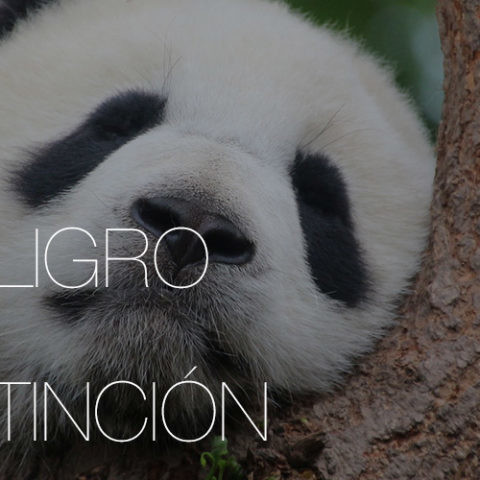 microtecnologia-peligro-extincion-animal