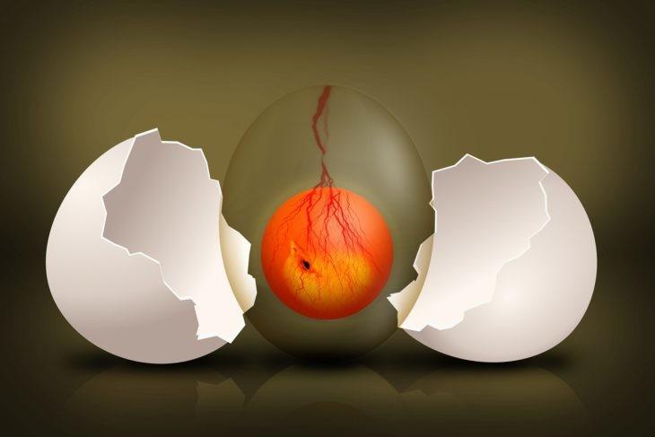 embryo-egg