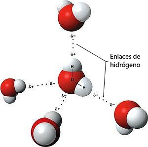Puentes de hidrógeno entre moléculas de agua