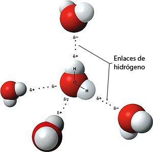 Puentes de hidrógeno entre diversas moléculas de agua