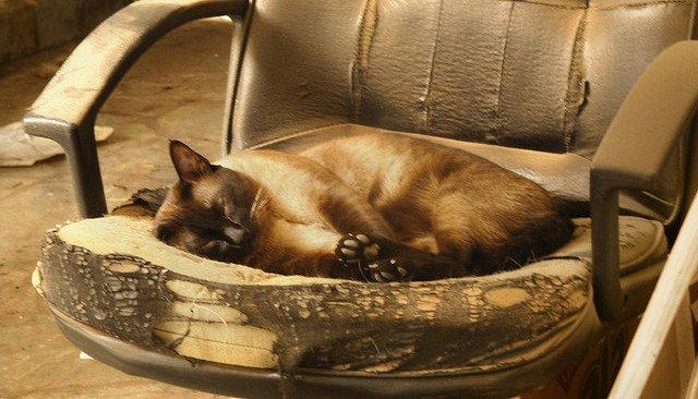 El gato de Morfeo... o simplemente un gato durmiendo