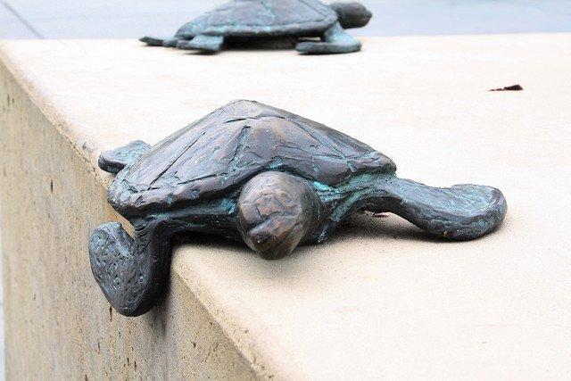 Una tortuga, paradigma de la lentitud