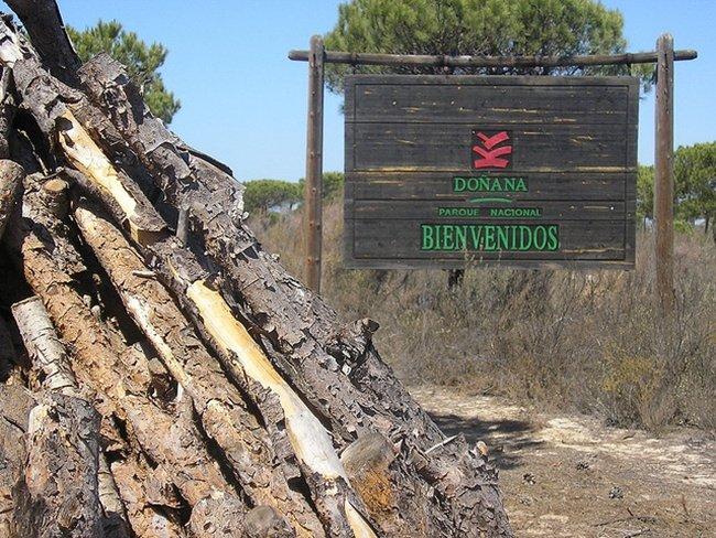 Bienvenido a Doñana