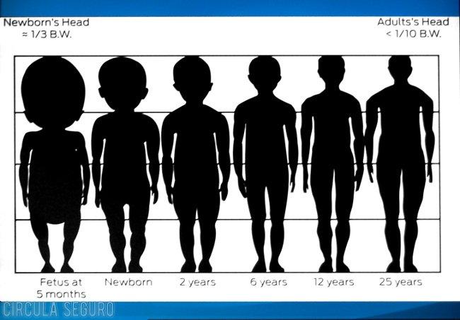 Proporciones entre cabeza y cuerpo