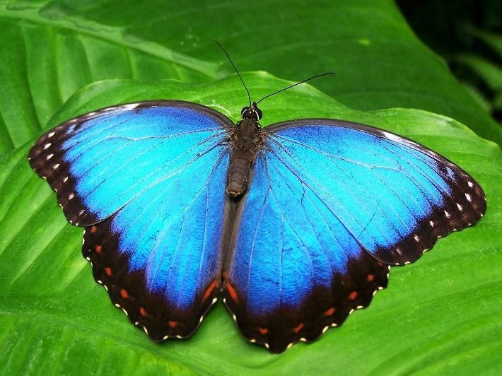 Efecto mariposa - DGT