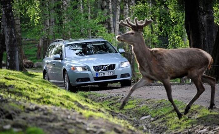 Animal-carretera