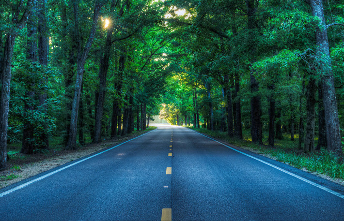 árboles en carretera, el efecto túnel