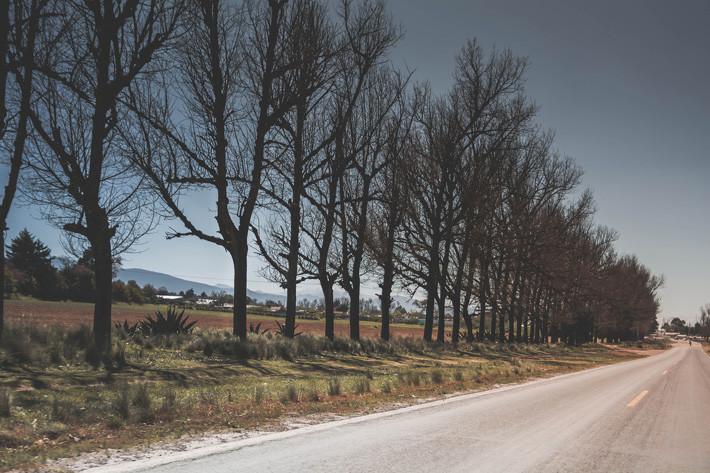 Árboles y carretera