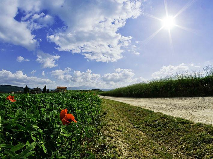 Conducir con alergia al polen