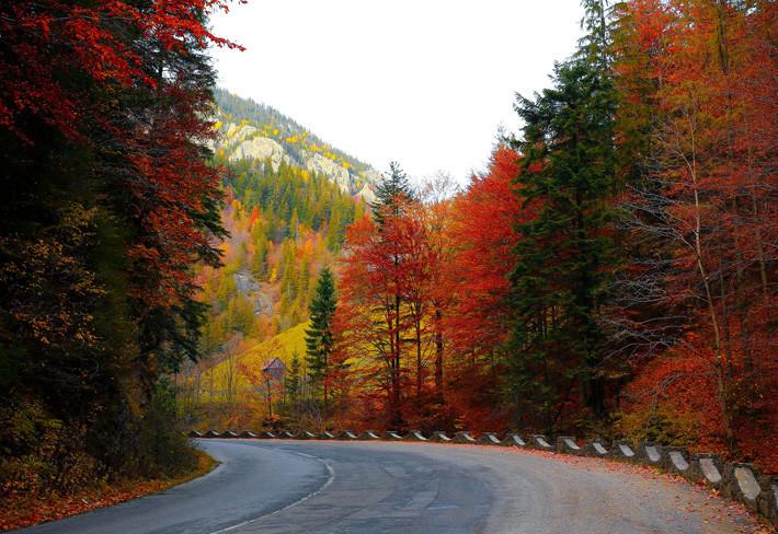 otoño carretera