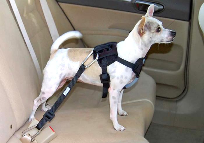 Vai viajar? Saiba como transportar o seu animal de estimação sem perigo para ambos.