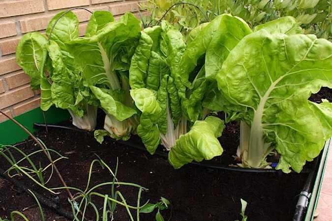 Diez cosas para plantar en tu huerto urbano en oto o - Que plantar en el huerto ...
