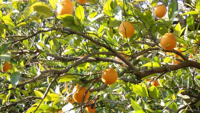 Un huerto urbano y poco tiempo libre soluci n los - Cuando plantar frutales ...