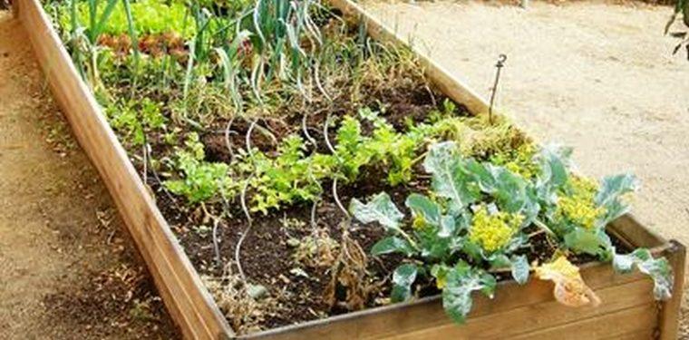 Zanahorias rotaci n de cultivos y m s en el huerto en la red for Huerto urbano que plantar