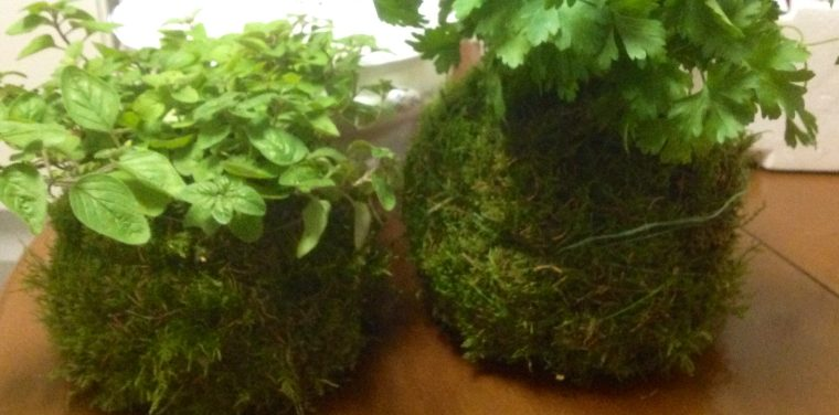 cultivos aromáticos