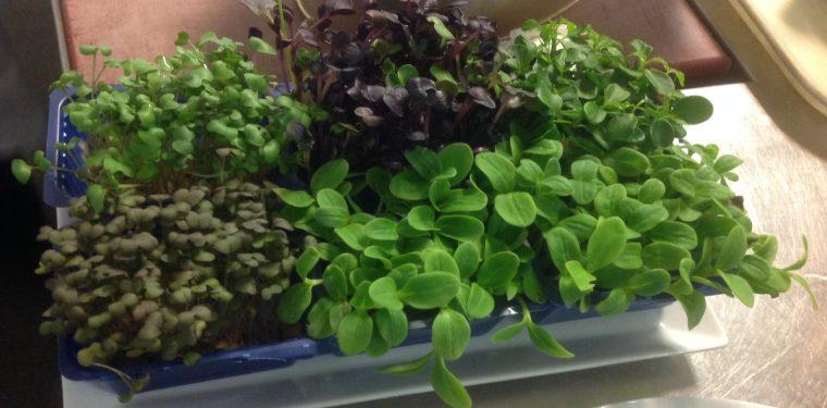 Diez soluciones para cultivar en apartamentos y casas con - Plantar hierbas aromaticas ...