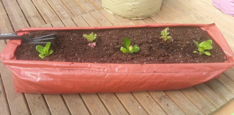 Qu plantar en invierno frutas y verduras para plantar for Arboles para plantar en invierno