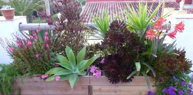 Un balc n de primavera con las mejores flores y plantas - Plantas de balcon ...