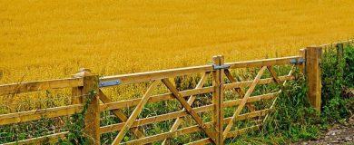 http://img.blogs.es/ennaranja/wp-content/uploads/2014/05/agriculture-71656_640-390x160.jpg