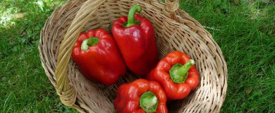 http://img.blogs.es/ennaranja/wp-content/uploads/2014/09/vegetables-392585_1280-390x160.jpg