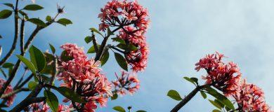 http://img.blogs.es/ennaranja/wp-content/uploads/2015/04/spring-390x160.jpg