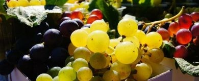 http://img.blogs.es/ennaranja/wp-content/uploads/2016/07/650_1000_grapes-180118_1280-390x160.jpg