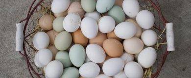 http://img.blogs.es/ennaranja/wp-content/uploads/2016/07/consumidor-huevos-2-390x160.jpg