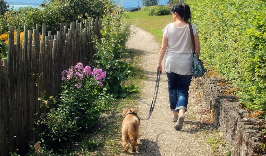 alojamiento por cuidar mascotas