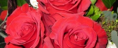 http://img.blogs.es/ennaranja/wp-content/uploads/2016/07/roses-116189_640-390x160.jpg