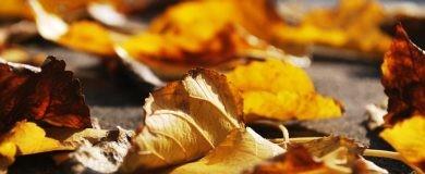 viajar en otoñohttp://img.blogs.es/ennaranja/wp-content/uploads/2016/09/otono-390x160.jpg