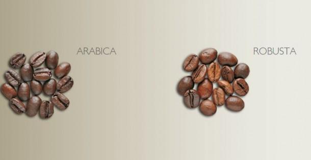 variedades café arábica y café robusta.