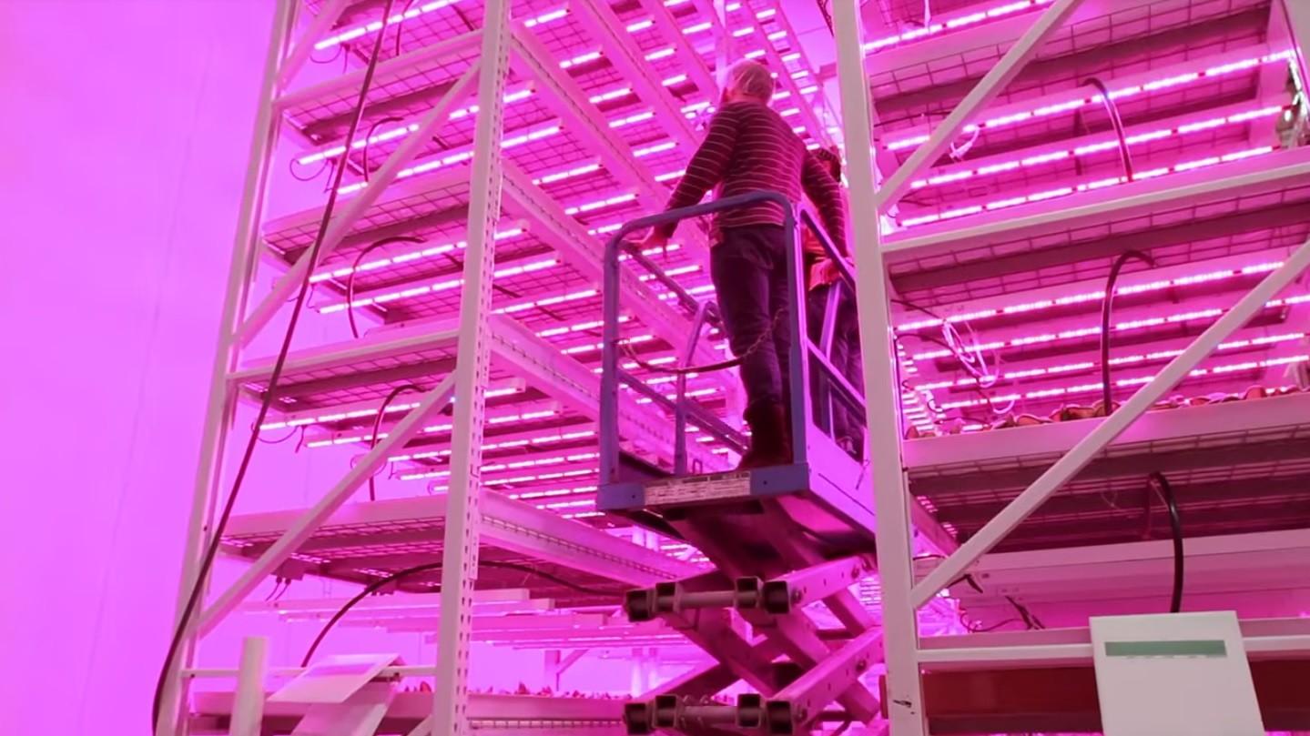 cultivo vertical de lechugas