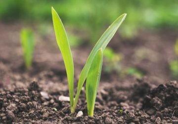 Agricultura de precisión: así cultivaremos en el futuro