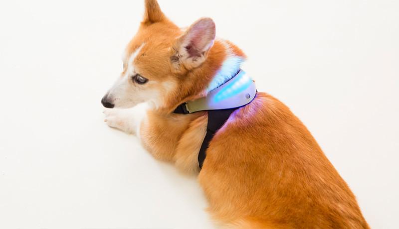 Los dispositivos más 'cool' para nuestras mascotas