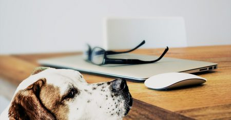 Estudios avalan la inteligencia de tu perro