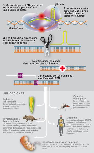 Así funciona CRISPR. Infografía: J. A. Peñas