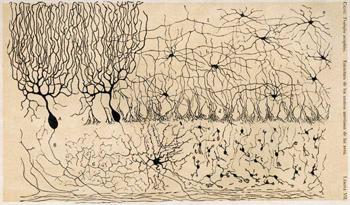 Ramón y Cajal dibujos