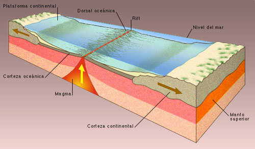 dorsal-atlantica