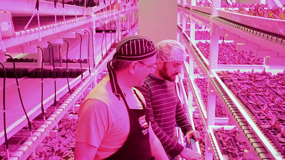 robots lechuga cultivo