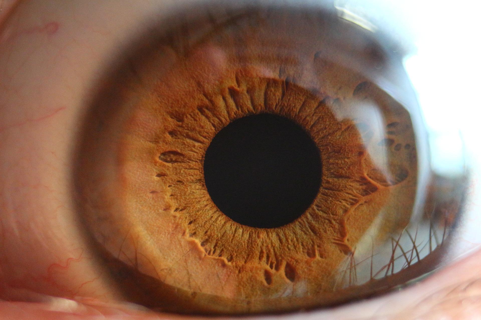 ojos prevenir ceguera