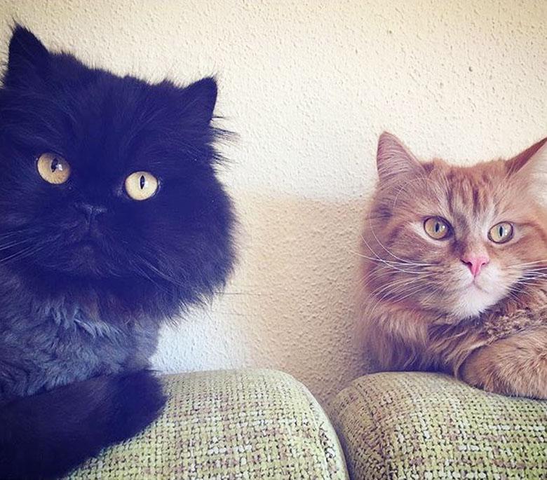gatos e internet