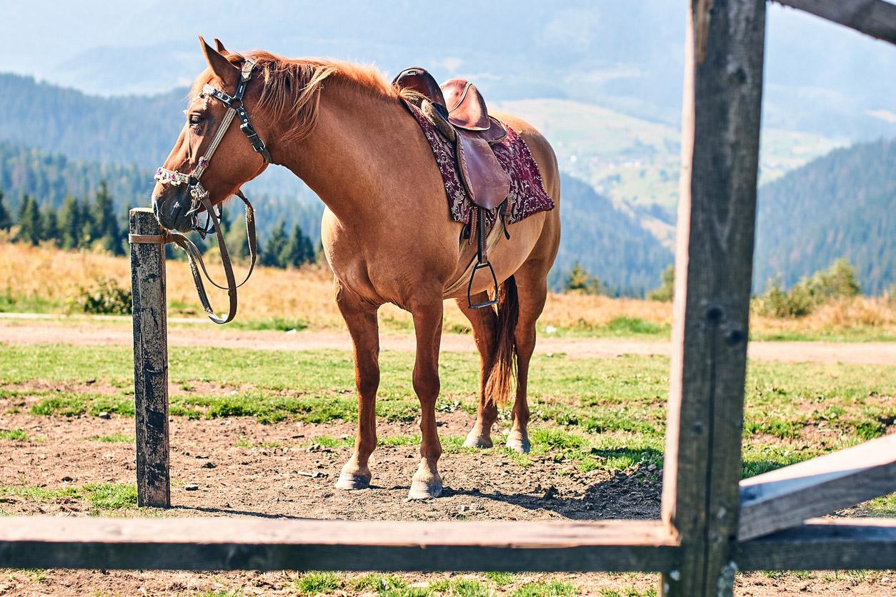 Dionysius Lardner futurólogos El caballo será el futuro del transporte