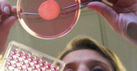 'Oreal. cultivo de piel. Imprimir órganos