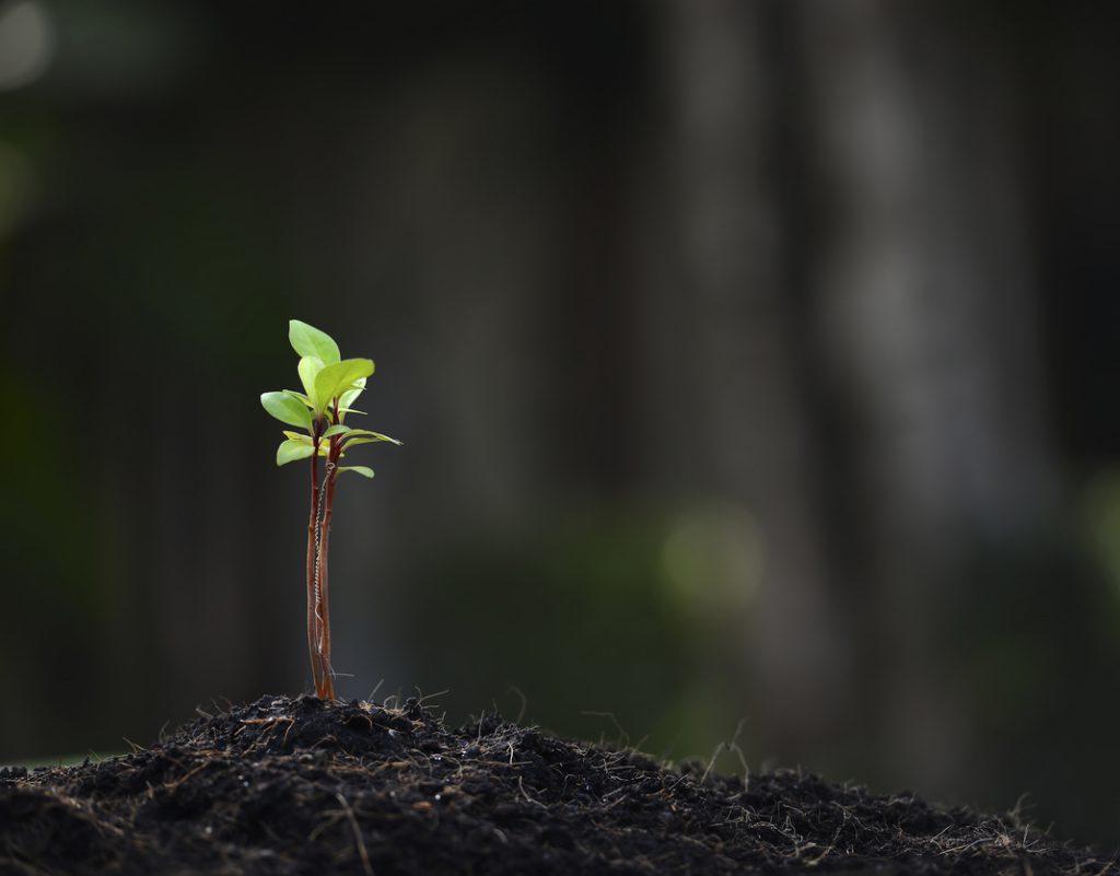 brote de una planta