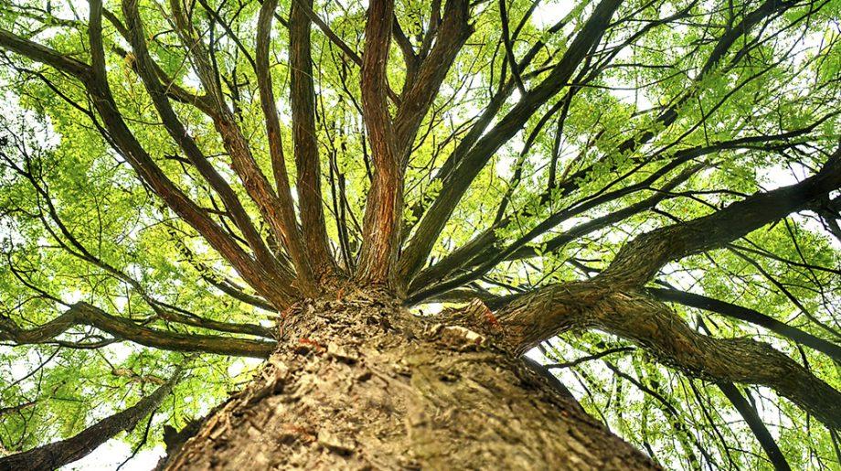 Los más de 15 sentidos de las plantas que ni imaginamos Plantas on