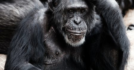 animal pensando