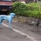 Perros azules India