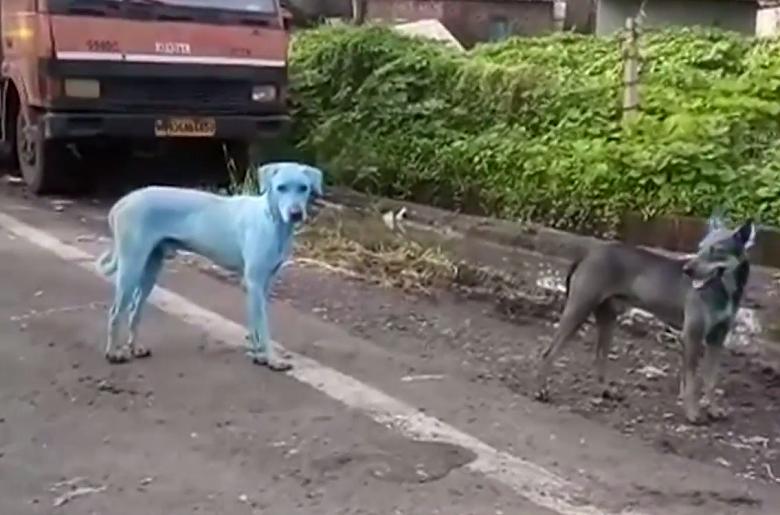 Paseando al perro - 1 7