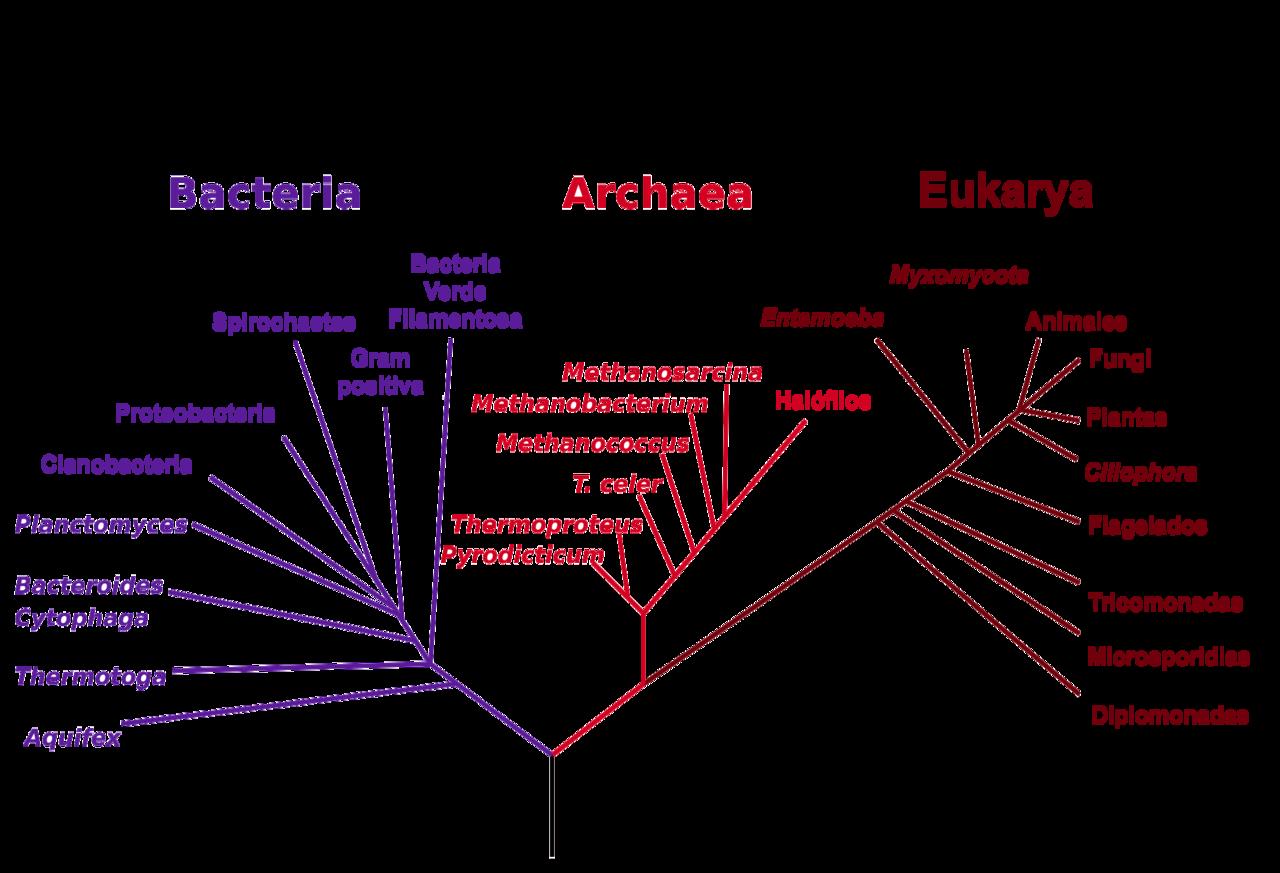 divisiones de la vida en bacterias, archaeas y aukariotas